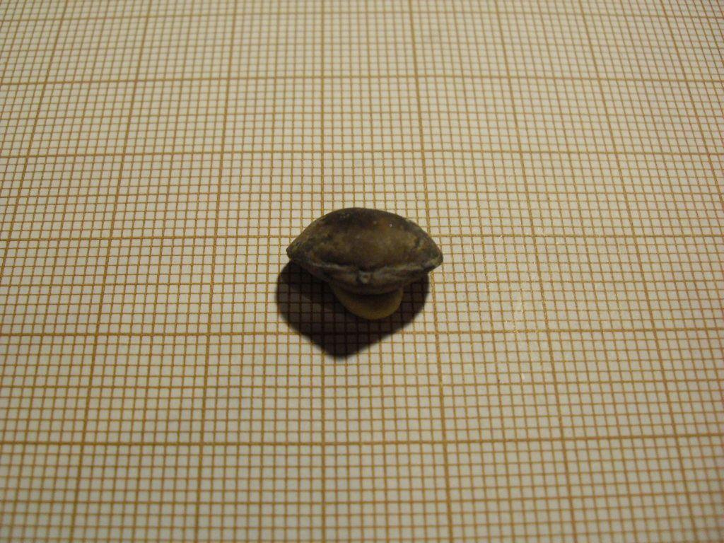 Fossiles de l'ancienne carrière du Château-Gaillard à Trélon dans le Nord. Dévonien-Frasnien moyen et supérieur.