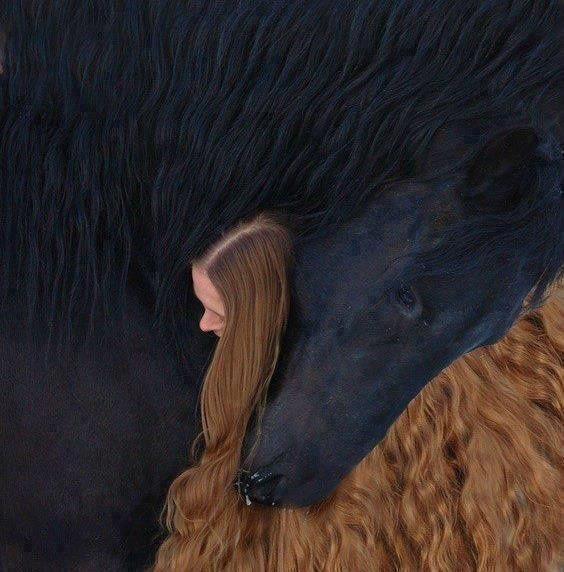 Animal-totem-le-cheval 3140