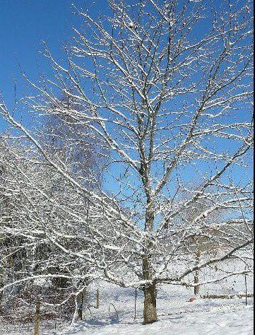 arbre-hiver 640x480