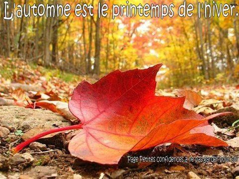 citation automne