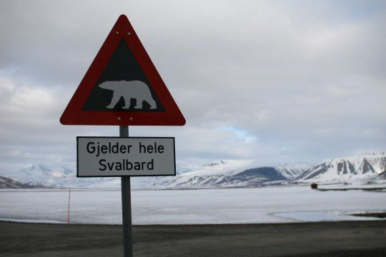 Svalbard-ours1-540x360