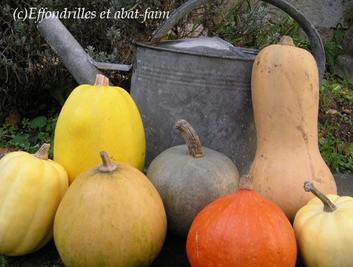 Courges-2.jpg
