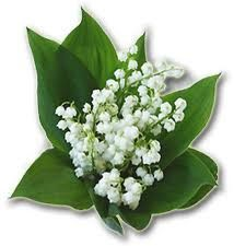 muguet 01