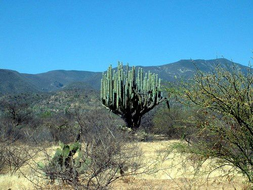mexi 4-copie-1