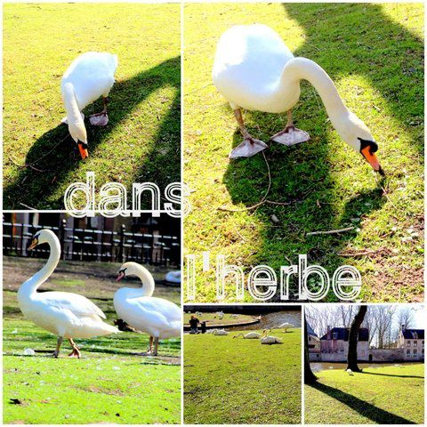 collage dan herbe