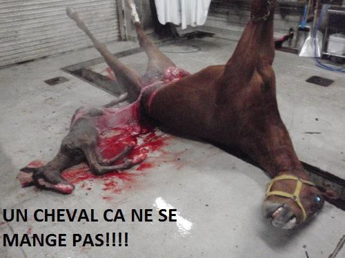 ANIMAUX-cheval.jpg