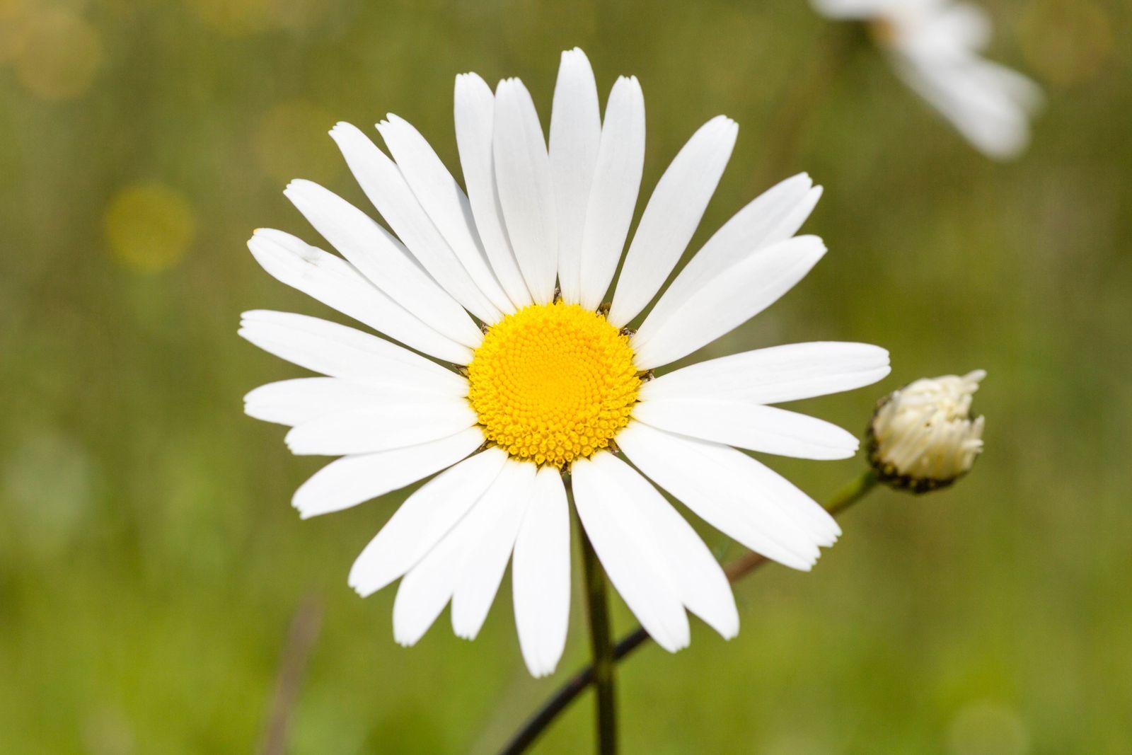 Le printemps au jardin le blog de hbalbumphotos for Fleurs jardin printemps