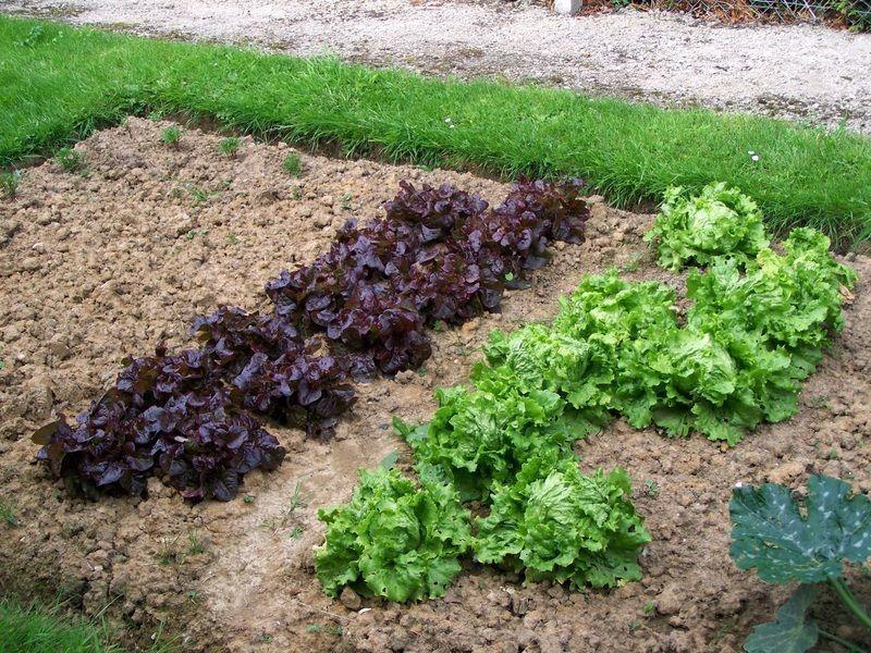 Au potager le blog de blog nature for Blog jardin potager
