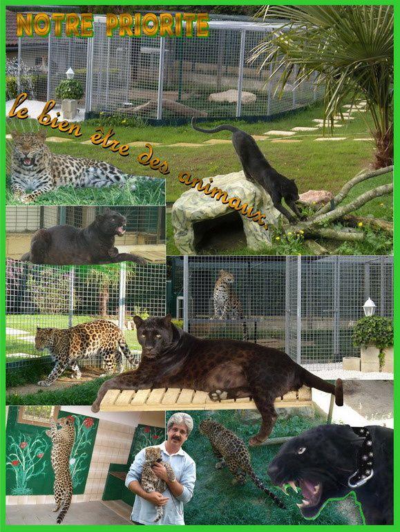 Cadre de vie de la panth re noire et du l opard le blog for Zoo haute loire