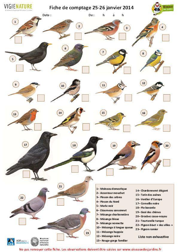 Op ration comptage des oiseaux le blog de for Liste oiseaux des jardins