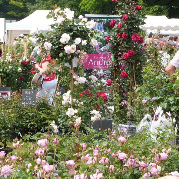 abbaye-de-chaalis---journees-de-la-rose-2013---les-roses-A.jpg