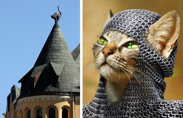 chat-medieval-toit-photo.jpg