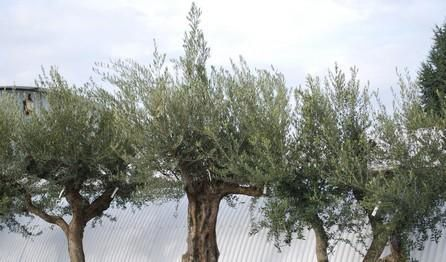 plantes-mediterraneens-quzy47x.JPG