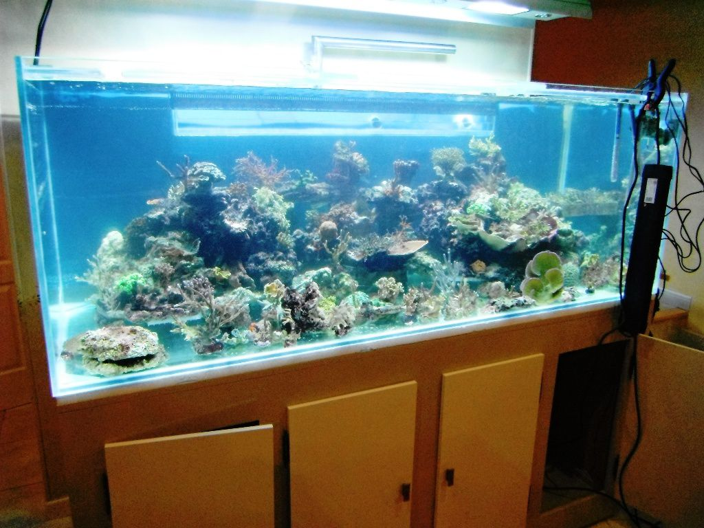 aquarium eau de mer 60 litres. Black Bedroom Furniture Sets. Home Design Ideas