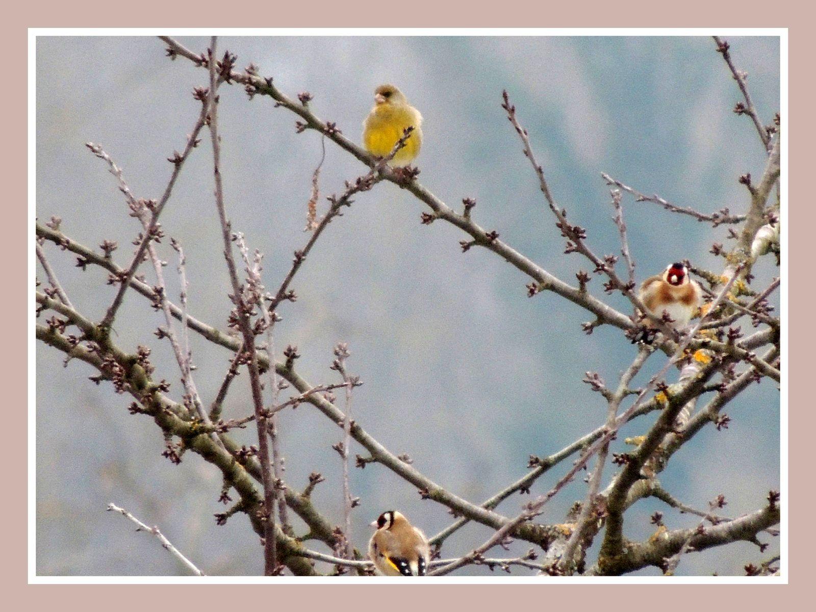 Fonds d 39 cran gratuits oiseaux de nos jardins par jip for Oiseaux de nos jardins