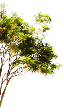 arbre-copie-1