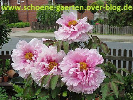 Garten031-01