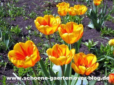 Frühlingsblumen07