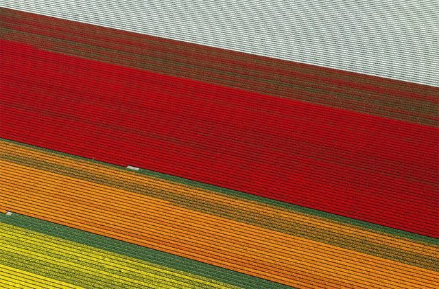 Tulip-Fields 3