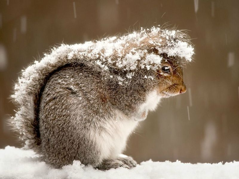 squirrel-snow-storm