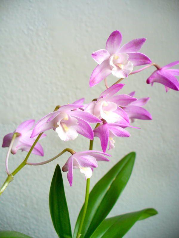 04 - orchidee