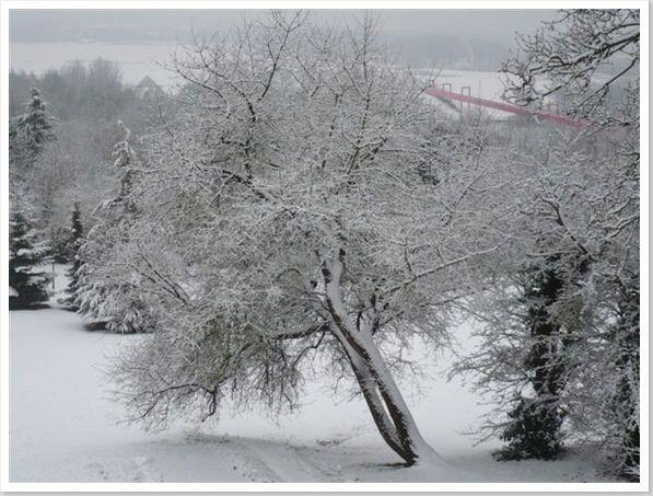 neige janvier 2009 017