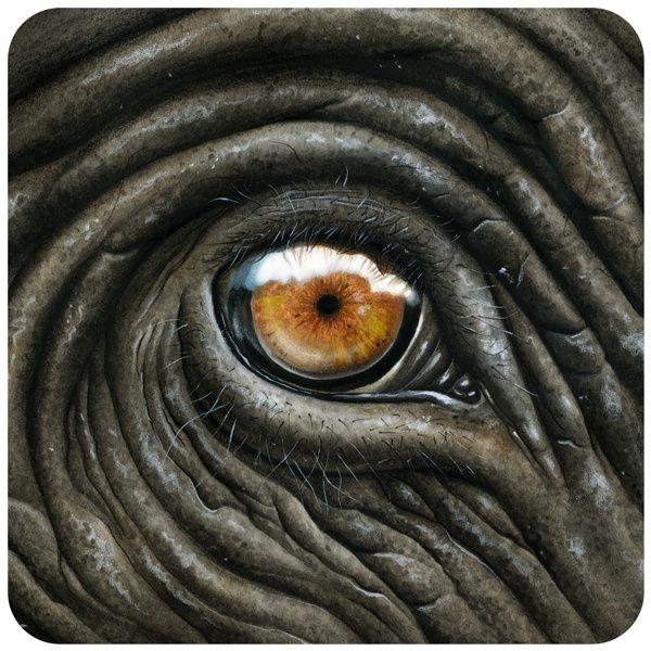 1. Illustrations animalières 1