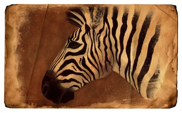 zebre florence dellerie