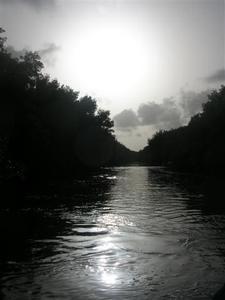 07-07-24-Promenade-dans-la-Mangrove--11-.JPG