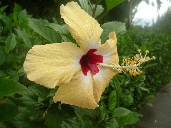 07-07-22-Jardin-botanique--36-.JPG