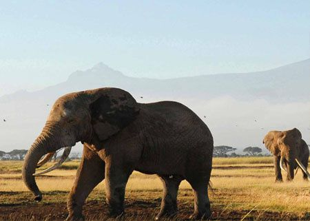 pekin-express-fauves-elephant-istock-photo.jpg