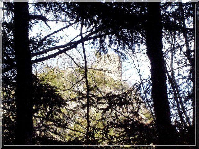 Que vois je derrière les arbres ?