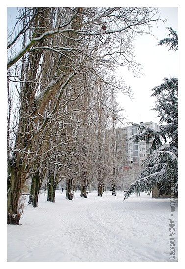 Neige Sotteville 20-12-2010 010