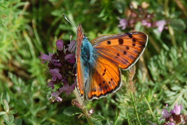 papillon madres 2010 a