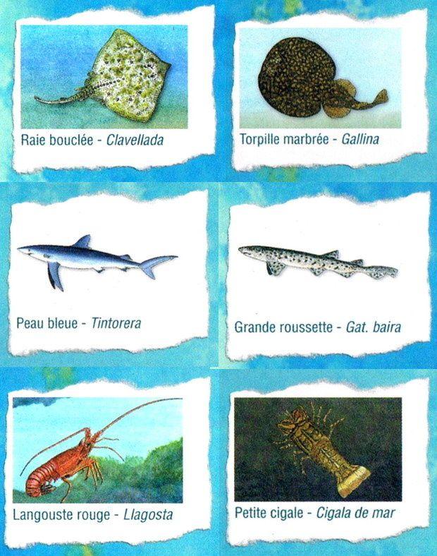 faune et flore sous marin med a