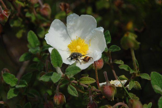 fleur-de-mai-12ga.JPG
