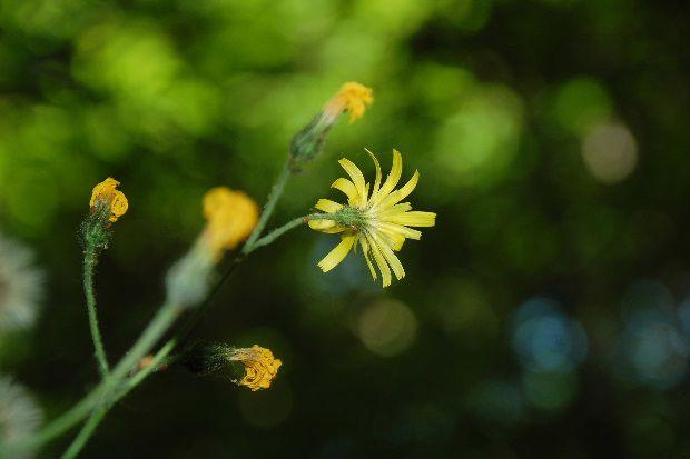 fleurs-0177.JPG
