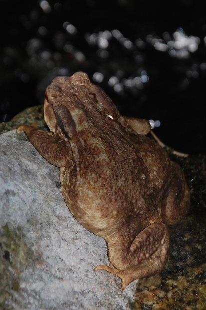 agly-crapaud-e.JPG