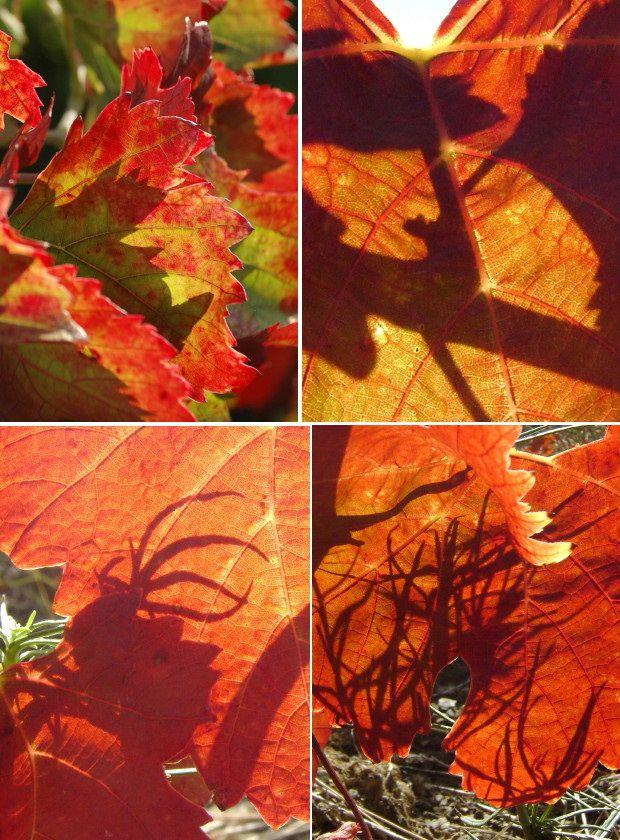 ombre et vigne 07