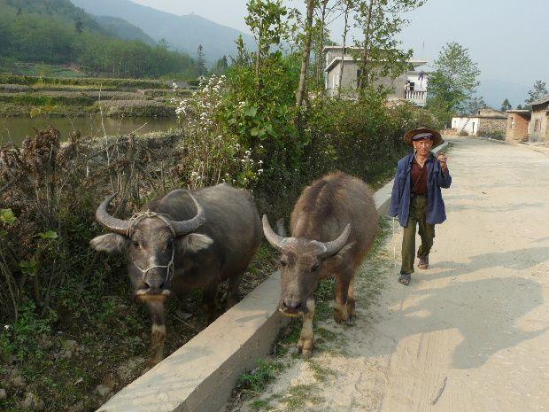 birmanie 105