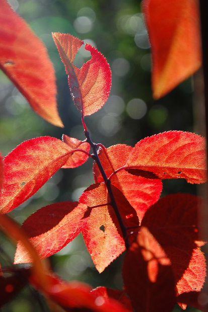 automne-tautavel-12b.JPG