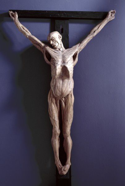 Anatomical-crucifixion-1811-James-Legg--this-plaster-cast-.jpeg