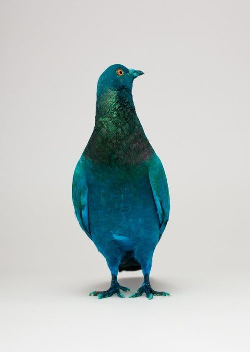 Some-pigeons-are-more-equal-than-others-Julius-von-Bismarck.jpg