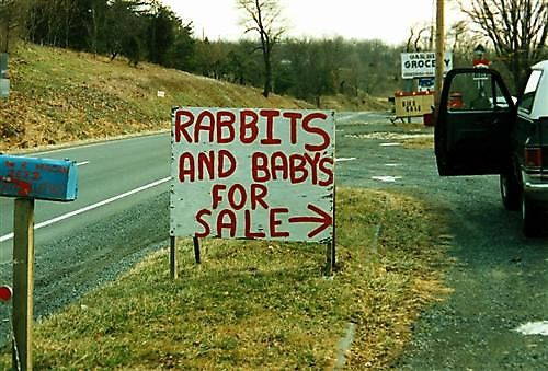 for-saleRabbits-And-Babies-For-Sale.jpeg