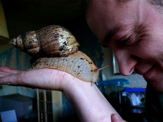 giant-african-snail-6.jpeg