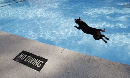 7623125-doggy-dip-marks-the-end-of-outdoor-pool-season.jpeg