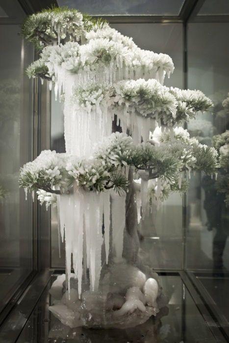 frozen-bonzai-par-Makoto-Azuma.jpeg