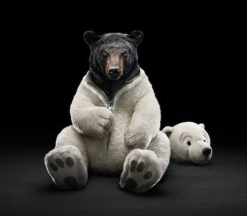bear-9.jpeg
