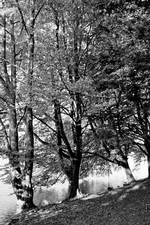 Une approche photographique en Noir et Blanc des Monts d'Ambazac