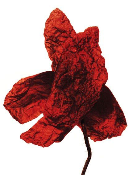 Denis Brihat Coquelicot 40x50 virage l or 1997